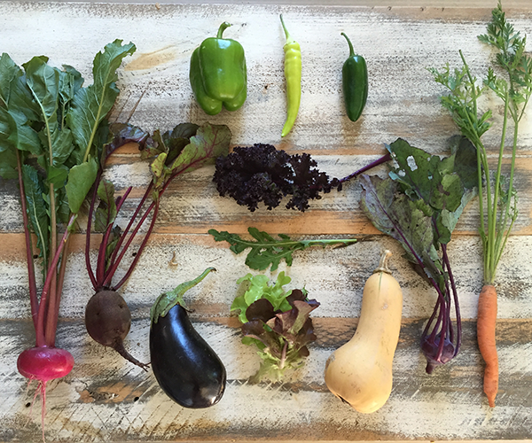 terramor vegetable csa box